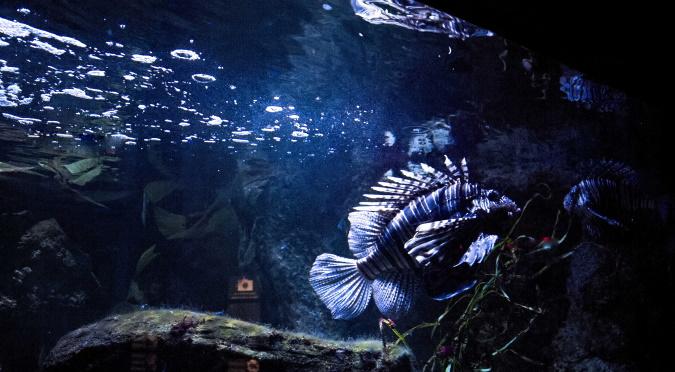 Liever dierentuin dan Sea Life